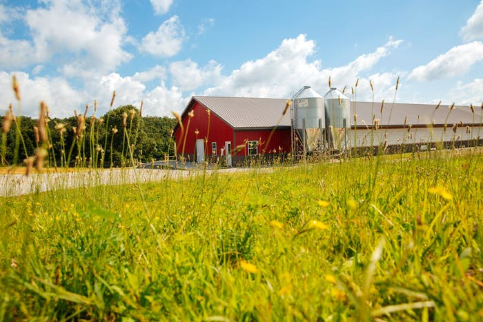 How Handsome Brook Farm is Using Traditional Production Methods to Reshape the Future of Eggs